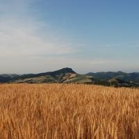 Monte delle Formiche by Rambolola