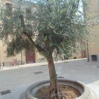 immagine da Piazza Ulivo - Piazza della Conciliazione