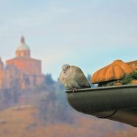 Una tortora a San Luca by Maurizio rosaspina