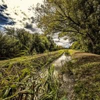 """immagine da Oasi di riequilibrio ecologico del """"Torrazzolo"""""""
