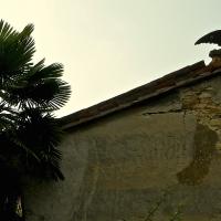 immagine da Castello di Gropparello