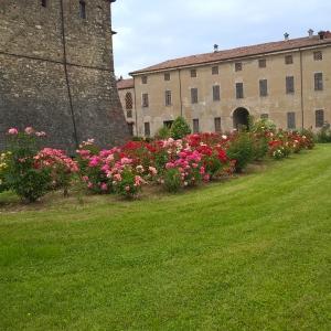 Castello e Rocca di Agazzano - Roseto foto di: |Corrado Gonzaga| - Castello di Agazzano