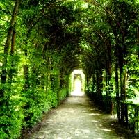 immagine da Giardino storico della reggia di Colorno