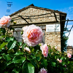 Antica Corte Pallavicina - Le rose dell'Antica Corte Pallavicina foto di: |Alessandro Gandolfi| - Antica Corte Pallavicina