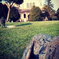 Ravenna - Basilica di Sant'Apollinare con bufali foto di Giacomo V. Armellino