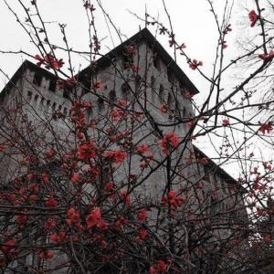 Rocca di Montecchio Emilia - Castello in primavera foto di: |Cosimo Sorvillo| - Cosimo Sorvillo via web