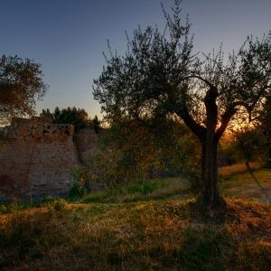 Castello Malatestiano di Coriano - Ulivi al Castello foto di: |Antonio Morri| - Comune di Coriano